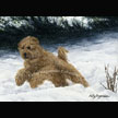 Spring Into Winter  (Golden Doodle)