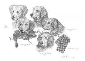 Study 2 - Five Great Golden's